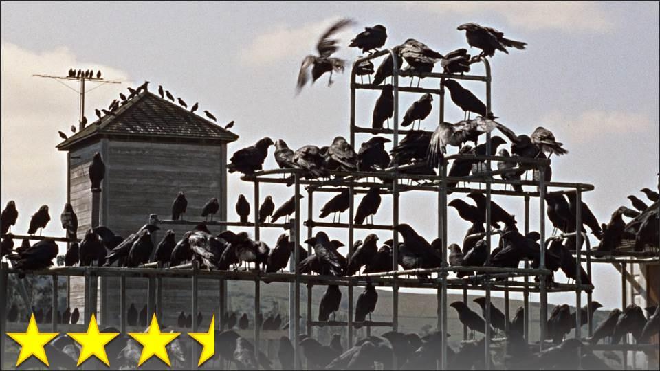 122 The Birds